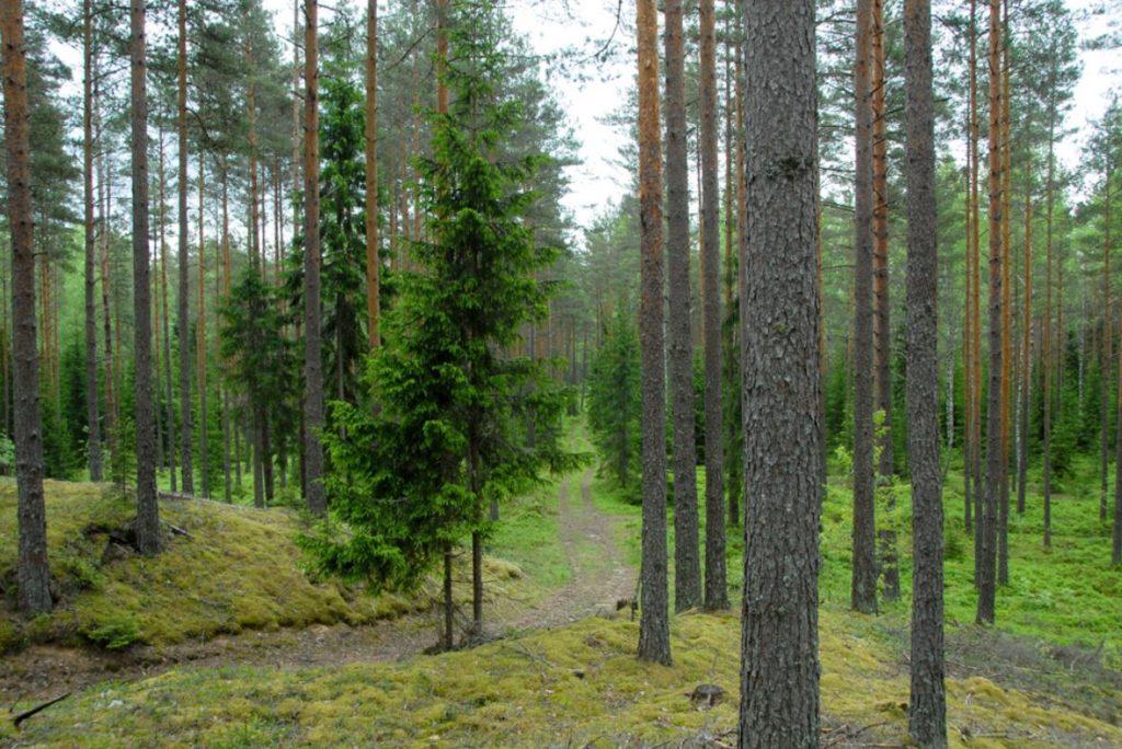 Viljandimaa orienteerumispäevak kutsub C.R. Jakobsoni radadele